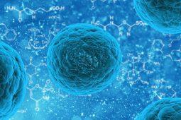 Hormon chroniący kobiety przed rakiem wątroby